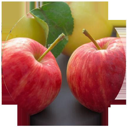 aepfel